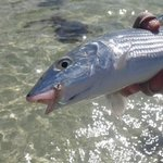 Bonefish caught in front of cabana