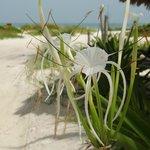 flower near the beach