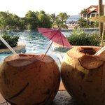 More Coconuts From Marcus back yard!