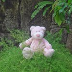 my teddy Peggy in the garden at the Yulia