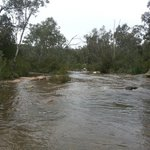 reedy creek