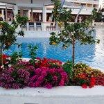 Pretty flowers around the new pool