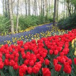 Kombinasi bunga berwarna-warni