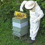 Visite de notre ruche