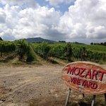 Mozart Wineyard