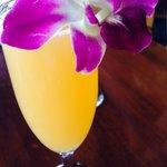 Adorable mimosas