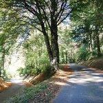 La Loubatiere one of France's most beautiful woods