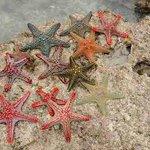 Le stelle marine in bassa marea