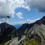 Alpine chough flying over the high peaks