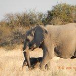 Elephant with calf