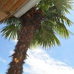 le palmier sur la terrasse