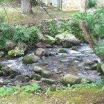 creek behind hotel