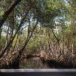 Everglades City Airboat Tour mangroves