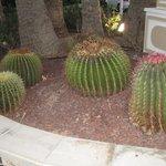 cactus dell hotel