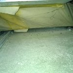 mosquitos in the air-conditioner drain