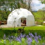 Beech dome