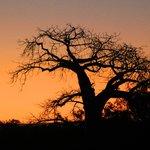 Selous Sunset