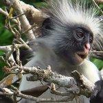 scimmiette di jozani forest