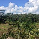 Tegal Alang Rice Terrace