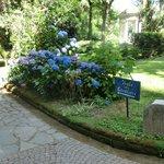 Красивые растения в парке