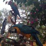 Papegojorna stod för underhållning.