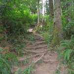 Cathedral Tree Trail going up toward Astoria Column