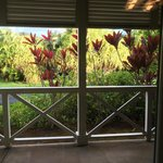 Patio pic taken from dining room