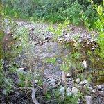babbling stream
