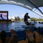 Orca show .... Brilliant