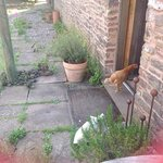 resident chickens - no we did not have roast dinner!!!!