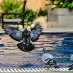Spakling pool