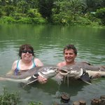 A couple of Amazon red tail catfish caught at the same time