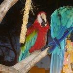 Parrots at cocktail bar