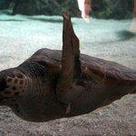 Vous avez le bonjour de la tortue!