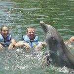 watching dolphin tricks