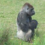 oh! un singe qui boude!!