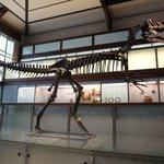 Museu de Ciências Naturais - réplica da ossada de dinossauro