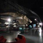 Museu de Ciências Naturais - Sala das Baleias