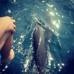 delfin jugando con las olas que hacía la lancha