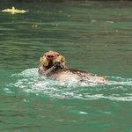 Otter near the lodge, by lodge guest Adam Buchsbaum
