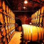 Mallorca Wine Tour