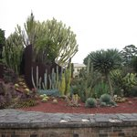 View of one of the Succulent garden plantings