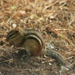Chipmunk at the Quechee Gorge State Park