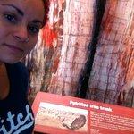 Petrified tree trunk!