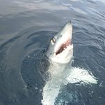 first shark of the day- short fin mako 9ft 200lb
