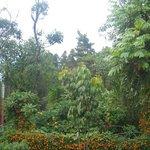 Medellín espacio en donde se disfruta de la naturaleza