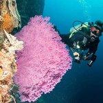 Adara Coral Wall