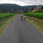 Bersepeda di sekitar kebun anggur