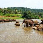 Elephant bathing place
