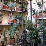 Le piante sul terrazzino